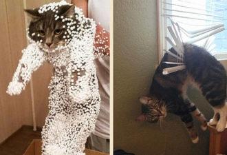 funny-cat-fails-5__6051